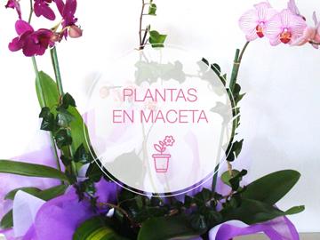 orquídeas en venta en guadalajara
